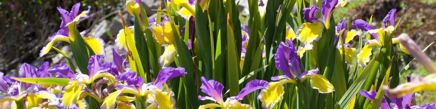 Découvrez L'Art des Jardins et du Paysage, le magazine de la culture jardin