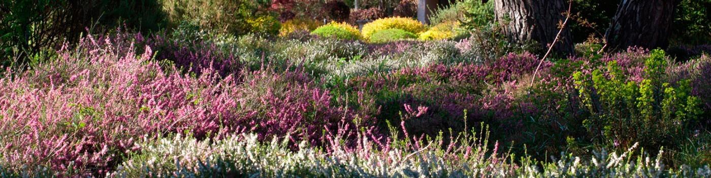 Abonnez-vous à L'Art des Jardins